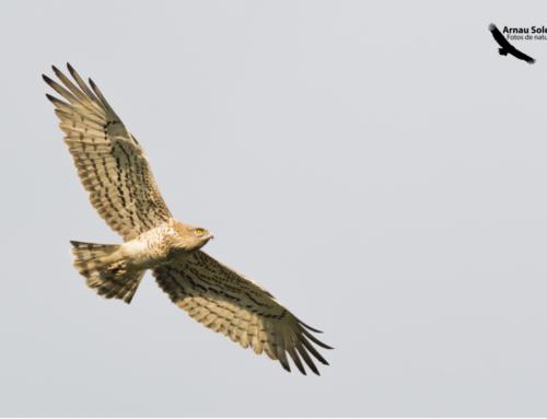 Jornada d'observació d'aus migratòries