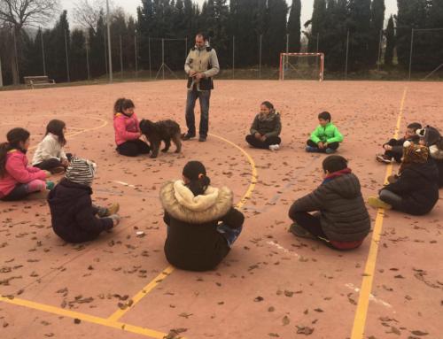 Èxit de participació a les Up's esportives de Nadal al Lluçanès