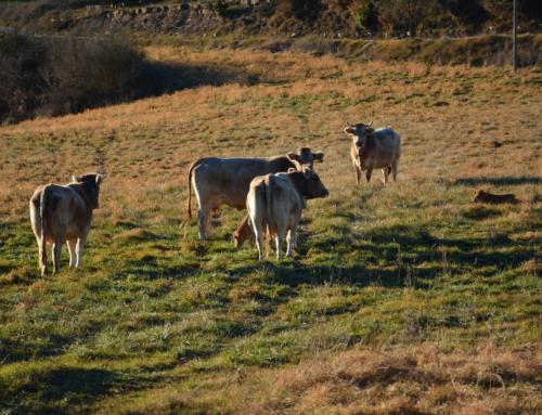 El Consorci participa al projecte Ruralization per garantir la successió agrària