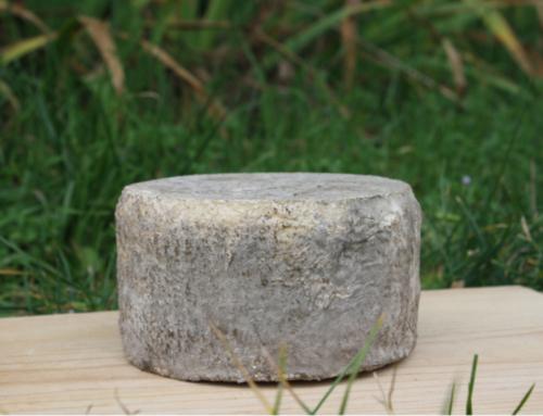 2a edició del curs d'Introducció a les principals tecnologies d'elaboració de formatges al Lluçanès